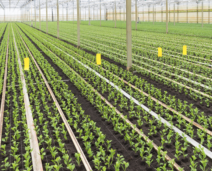commercial indoor cultivation warehouse